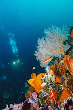 Dive Accommodation in Albany Australia